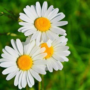 Profile a beleza das flores 4