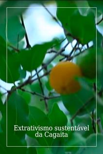 Small extrativismo sustent%c3%a1vel da cagaita